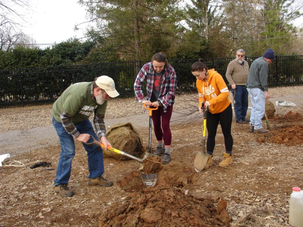 Trees Knoxville aids landmark Sequoyah Hills ash trees - Knox TN Today